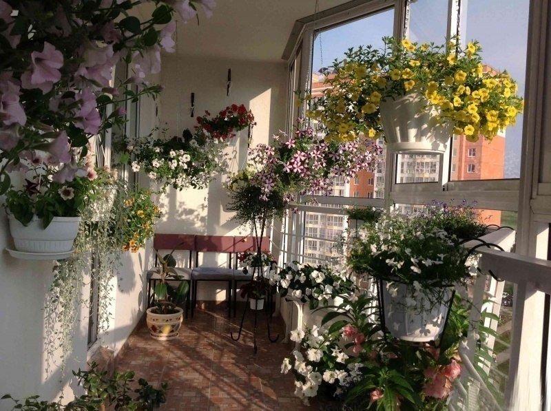 Balkong med blomster