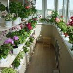 Hyller med blomster på balkongen